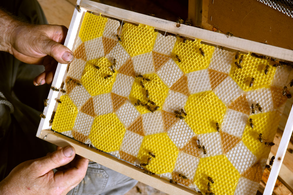 Luce moreau l artiste qui sculptait avec les abeilles - Dessin de ruche d abeille ...